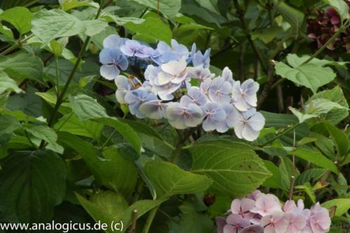 albinar f16-8173