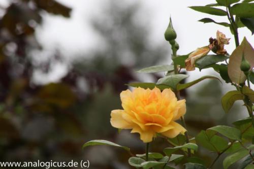 albinar f16-8180