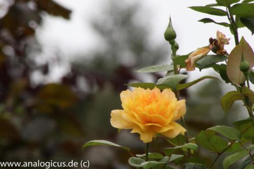 albinar f32-8181