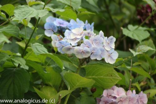 albinar f6.3-8170