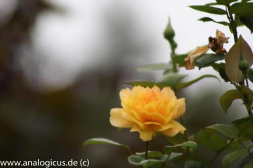 albinar f6.3-8178