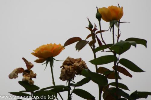 albinar f8-8175