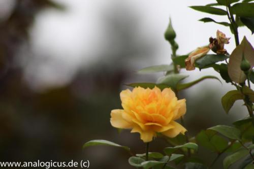albinar f8-8179